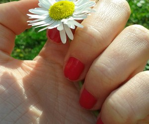 colors, flower, and hand image