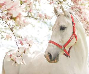 animal, soft, and spring image