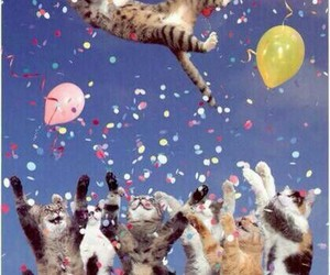 birthday, party, and cats image
