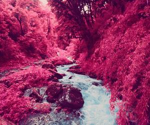 beautiful, pink, and nature image