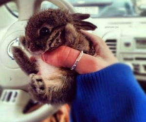 cute, bunny, and little image