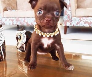 dog, face, and luxury image