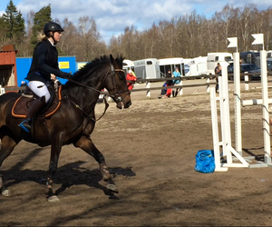equestrian, sweden, and horse image