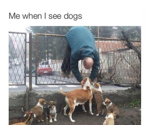 dogs, me, and funny image