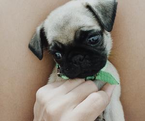 cachorro, dog, and pet image