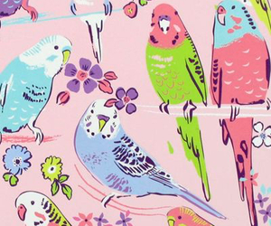 background, birds, and color image