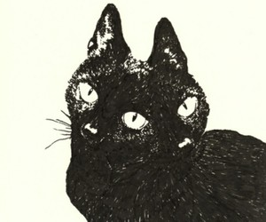 cat, art, and black and white image