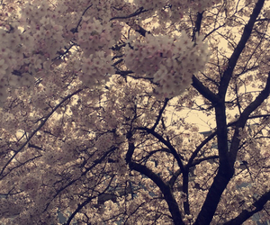 dutch, netherlands, and spring image