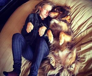 dog and amanda seyfried image