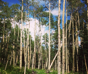 aspen, my happy place, and aspen trees image