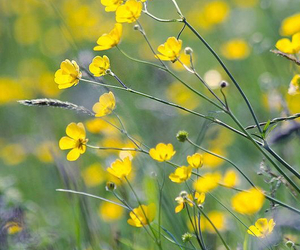 flower field, tiny flowers, and Wild Flowers image