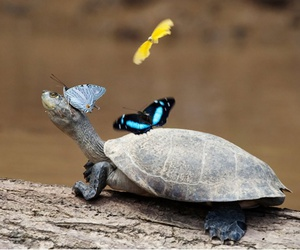 butterfly, turtle, and animal image