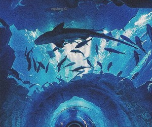 blue, shark, and fish image