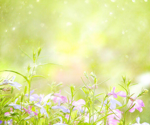 flowers and Wild Flowers image