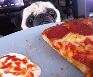 pizza, dog, and pug image