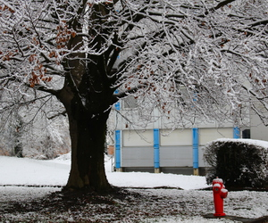 arbre, neige, and couleurs image