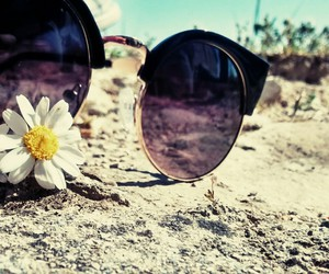 beautiful, flowers, and glasses image