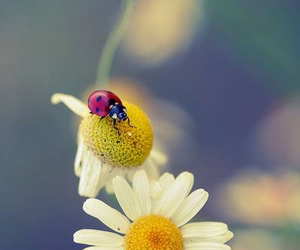 botanical, spring, and springtime image