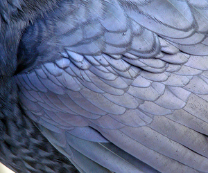 purple, bird, and feather image
