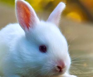 animal, animals, and bunny image