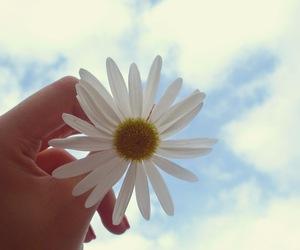 ceu, flor, and flowers image