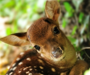 animal, deer, and cute image