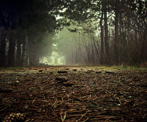 forest, photography, and beautiful image