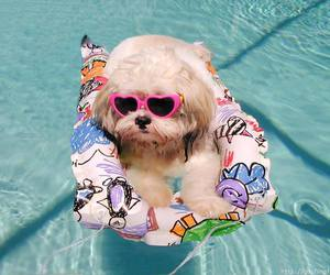 dog, cute, and summer image