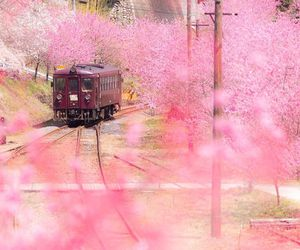 cool, photography, and pink image
