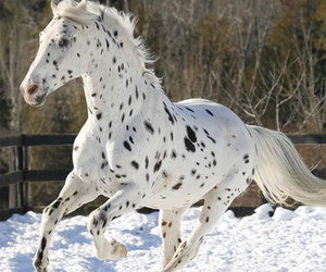 horse, animals, and snow image