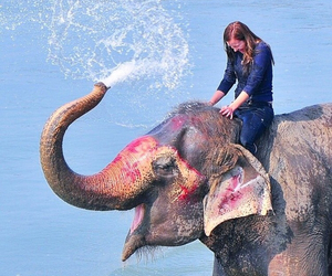 adventure, elephant, and girl image