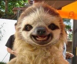animal, smile, and sloth image
