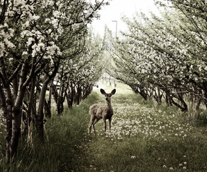 nature, deer, and flowers image