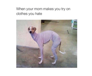 funny, dog, and clothes image