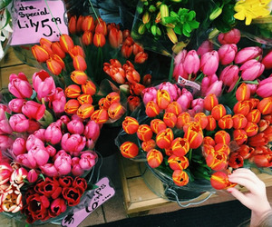 flowers, tulips, and tumblr image