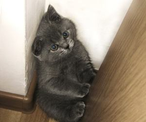 baby animals, cats, and grey image