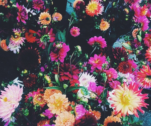 flowers, colors, and pink image