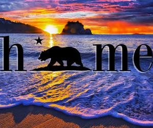 beach, california, and grizzly bear image
