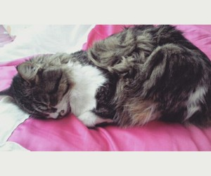 cat, cats, and sleep image