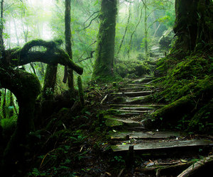 forest, taiwan, and tree image