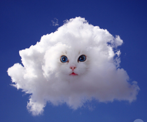 cloud and cat image