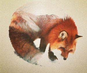 fox, art, and animal image