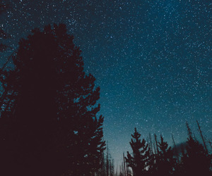 stars, forest, and nature image