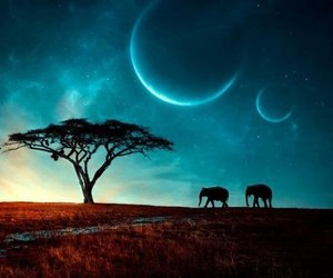 elephant, nature, and sky image