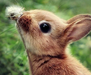 animal, cute, and bunny image
