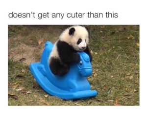 funny and cute panda animal image
