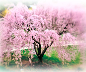 cherry blossom, happy, and pretty image
