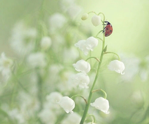 botanical, may flower, and happy image