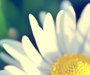 flower, macro, and nature image