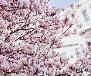 flowers, pink, and cherry image